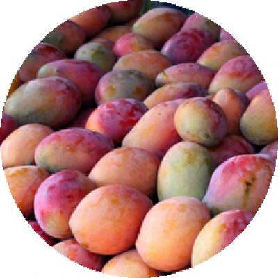 Mango Keitt 1