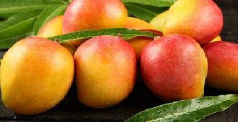 Mango Kent 2