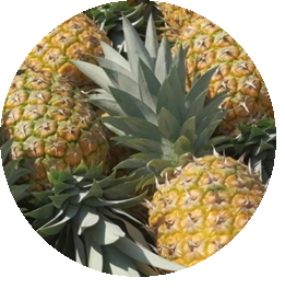 Ananas Pineapple