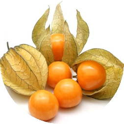 Aguaymanto Physalis
