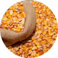 Maiz Amarillo. Yellow Corn